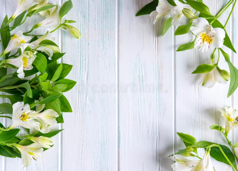 Background for text banner on a white wooden background with white flowers. Blank, frame for text. Greeting card design with. Flowers. alstroemeria on wooden royalty free stock photos