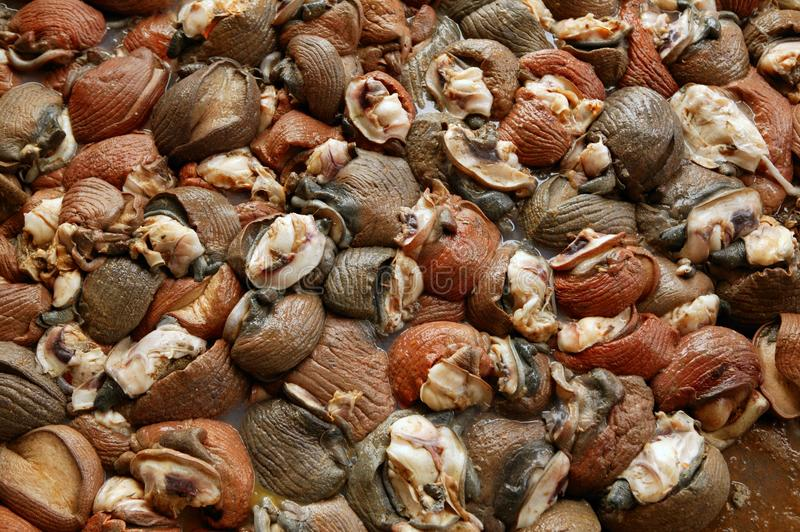 Download Background Texture Of Atlantic Sea Snail Meat Stock Image - Image: 10979687