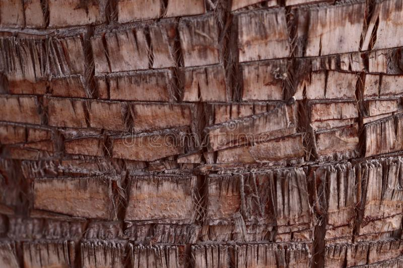 Background texture of the bark of an old brown palm tree. The concept of nature. Cropped shot, close-up, vertical, side view stock photography