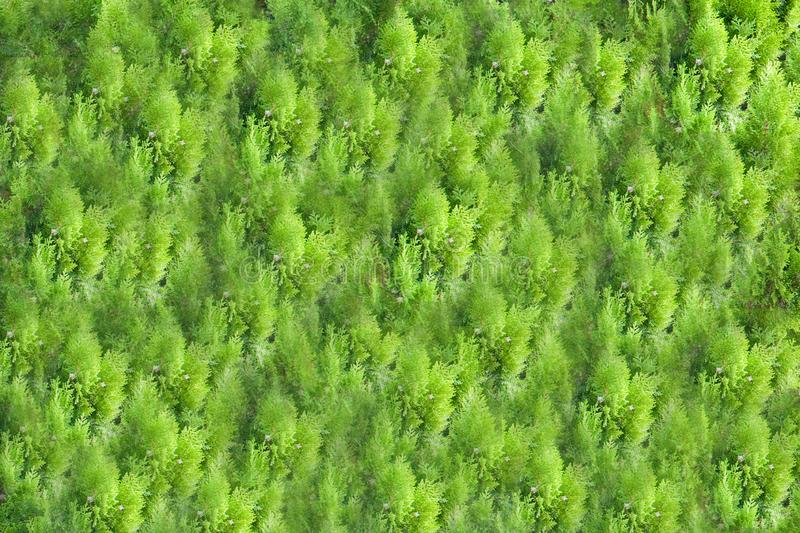 Background and texture of beautiful green grass, trees or plants pattern. royalty free stock photo