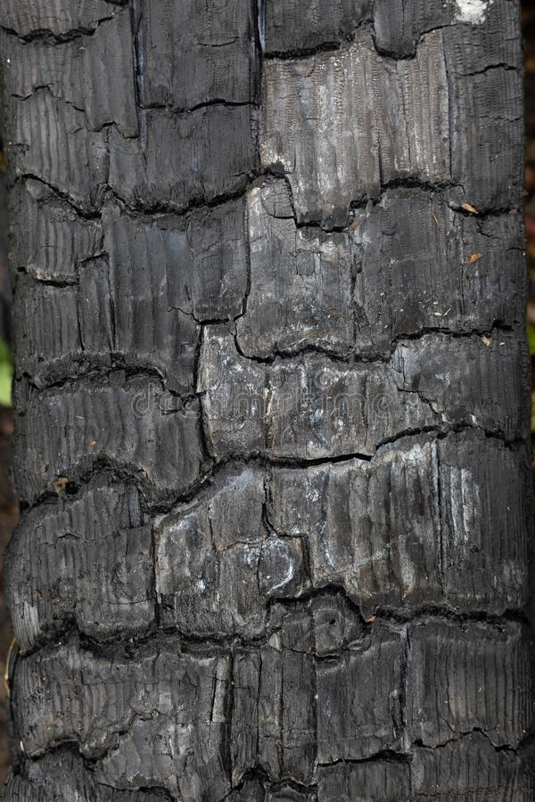 Background, backdrop, texture black charred timber, wood, coal after fire, abstract and in cracks of charcoal royalty free stock images