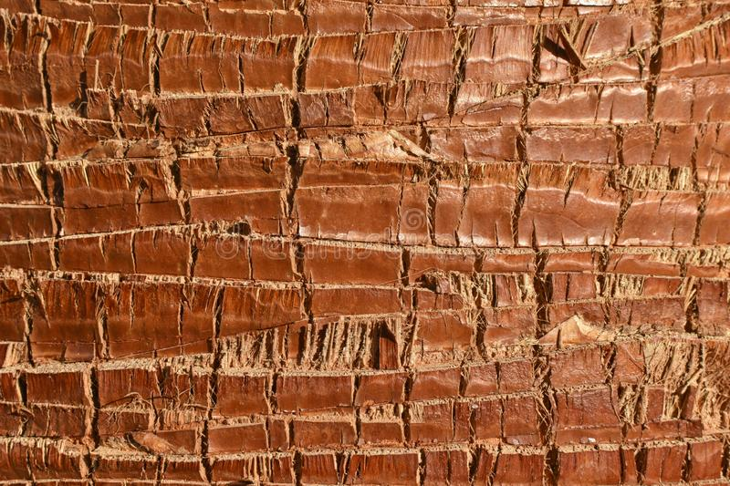 Background texture brown and gray palm tree trunk. Close up stock photo