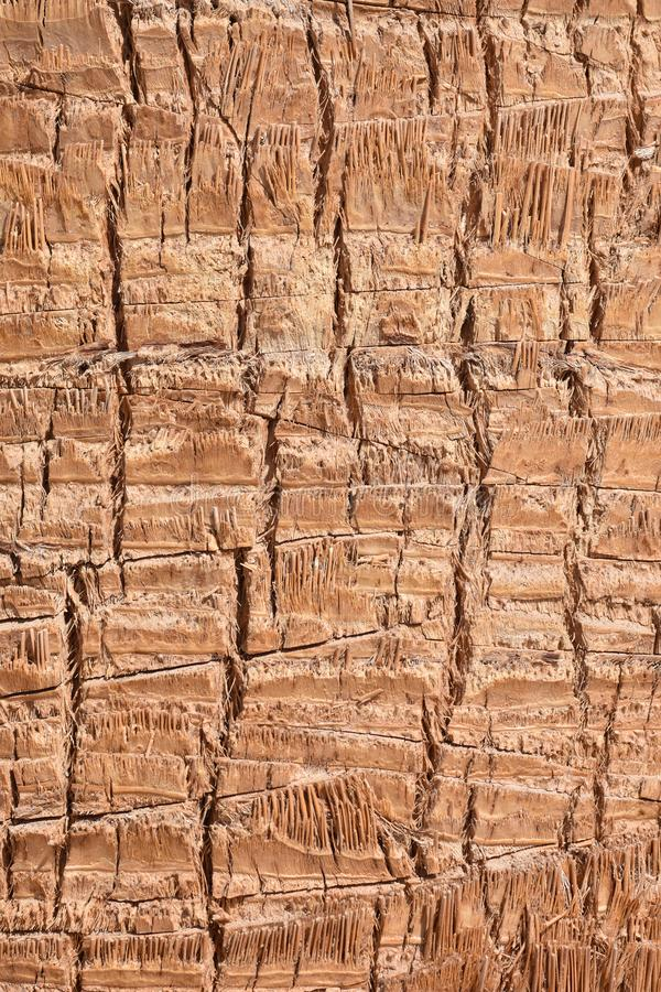 Background texture brown and gray palm tree trunk. Background texture brown palm tree trunk stock image