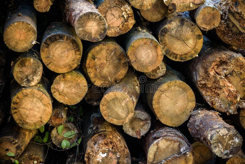 Wood Billet Stock Images - Download 2,220 Royalty Free Photos