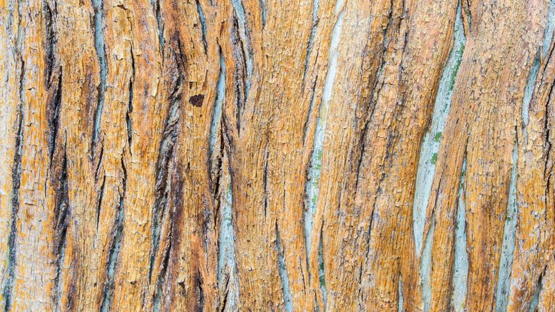 Background texture - close up of tree bark pattern stock photo