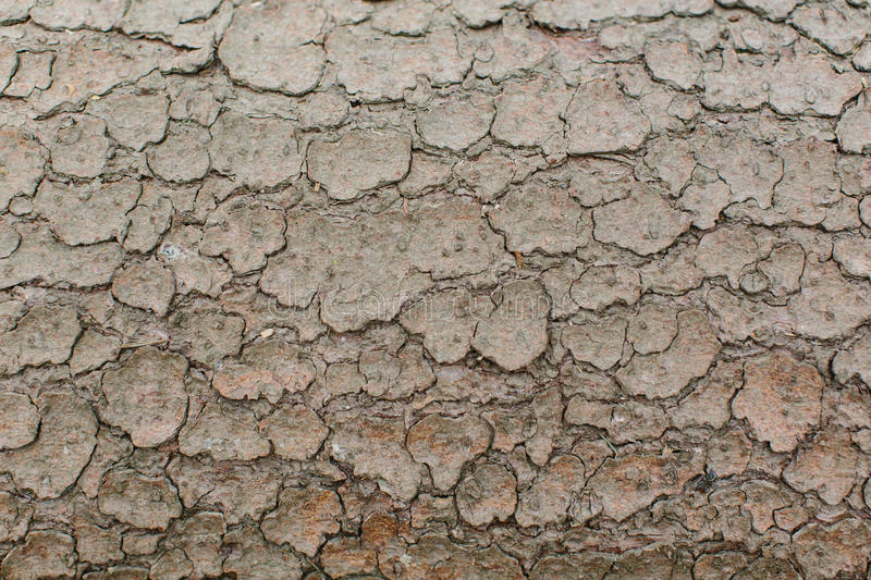 Background texture of dried cracked mud stock photos