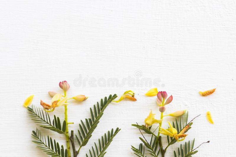 Background texture nature tamarind flower and leaf herbal plant arrangement flat lay postcard style stock photography