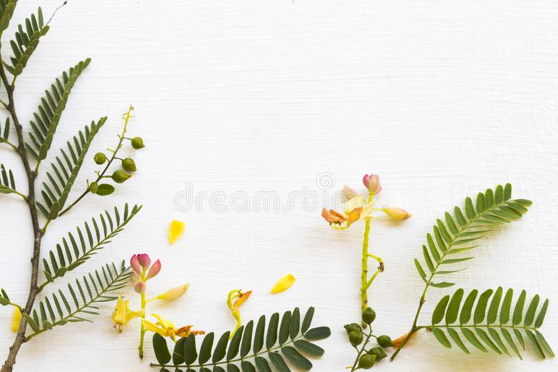 Background texture nature tamarind flower and leaf herbal plant arrangement flat lay postcard style royalty free stock photos