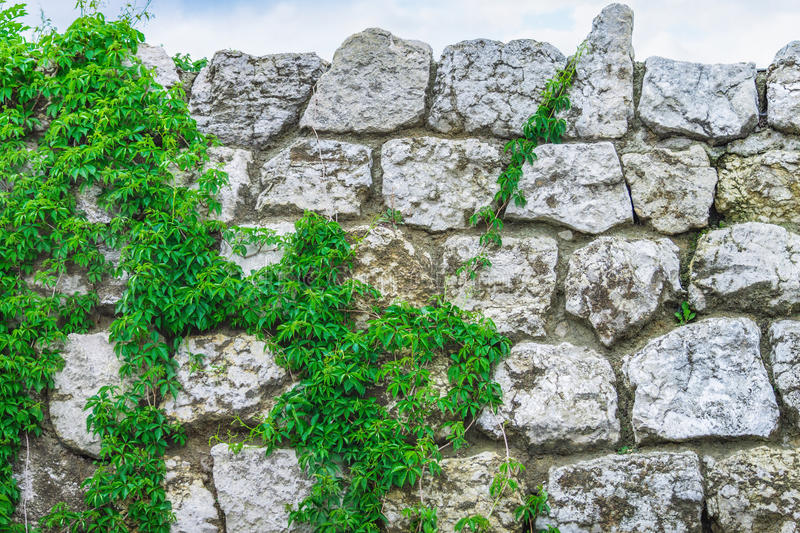Background texture old stone wall plants sky stock photos
