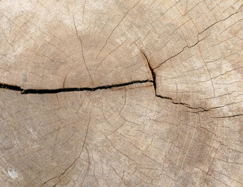 Background and texture of old stump royalty free stock images