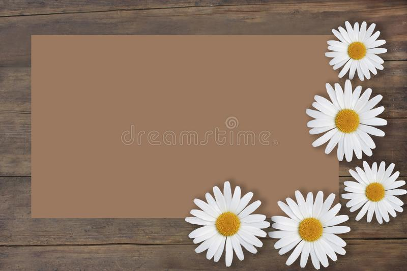 Background texture old tree. Daisy flowers. Place for text. Background texture old tree. Beautiful daisy flowers. Place for text royalty free stock photos
