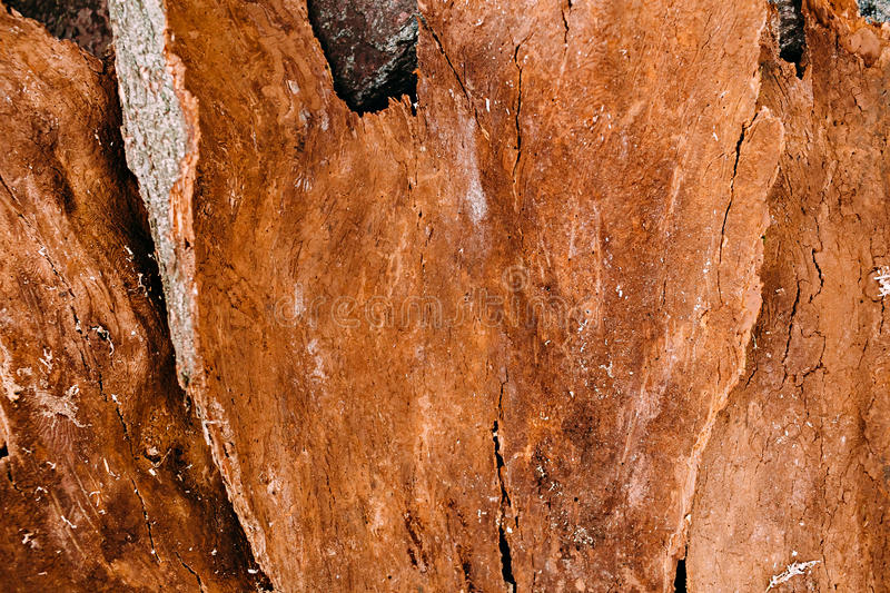 Background texture of old wood. Texture of bark wood use as natural background royalty free stock images
