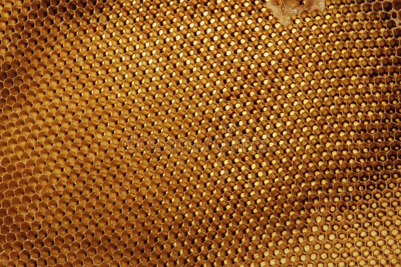 Background texture and pattern of a section of wax honeycomb from a bee hive filled with golden honey in macro view.  stock photos
