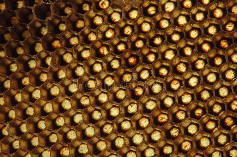 Background texture and pattern of a section of wax honeycomb from a bee hive filled with golden honey in macro view.  royalty free stock photos