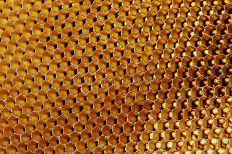 Background texture and pattern of a section of wax honeycomb from a bee hive filled with golden honey in macro view.  stock photo