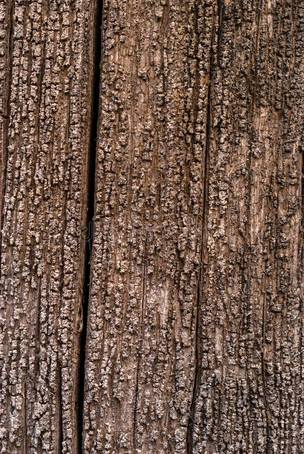Background - texture of a rotten tree stock photography