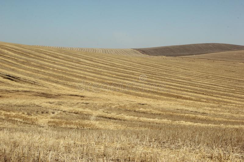 Background texture. Straw on a sloping field in spring stock image
