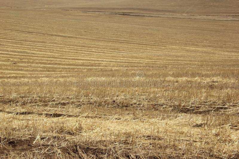 Background texture. Straw on a sloping field in spring royalty free stock photo