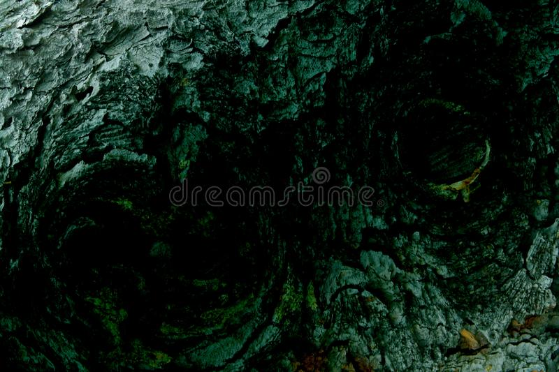 Background texture of tree bark with owl eyes. Background grunge texture of tree bark closeup with owl eyes stock photography