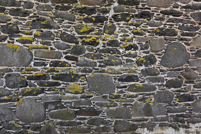 Background texture of yellow green lichen covering grey bluestone wall made of basalt rocks stock image