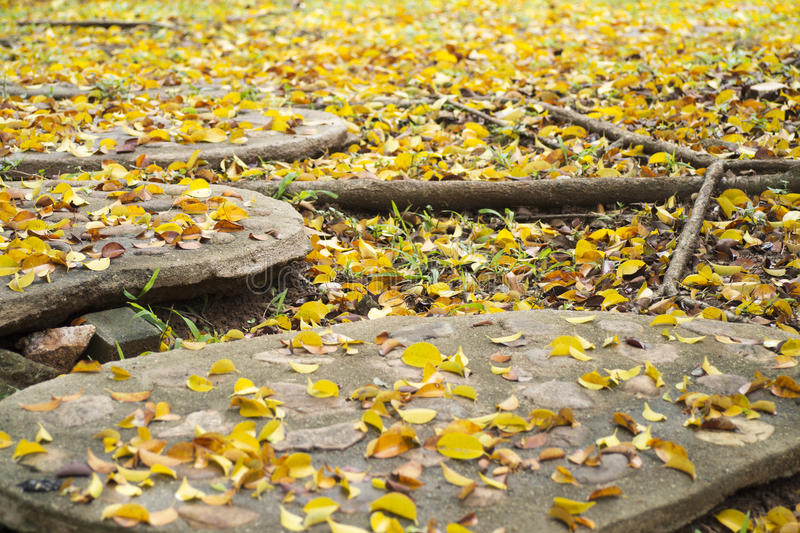 Background texture of yellow leaves in Autumn with big root of tree, foliage on the floor. stock image