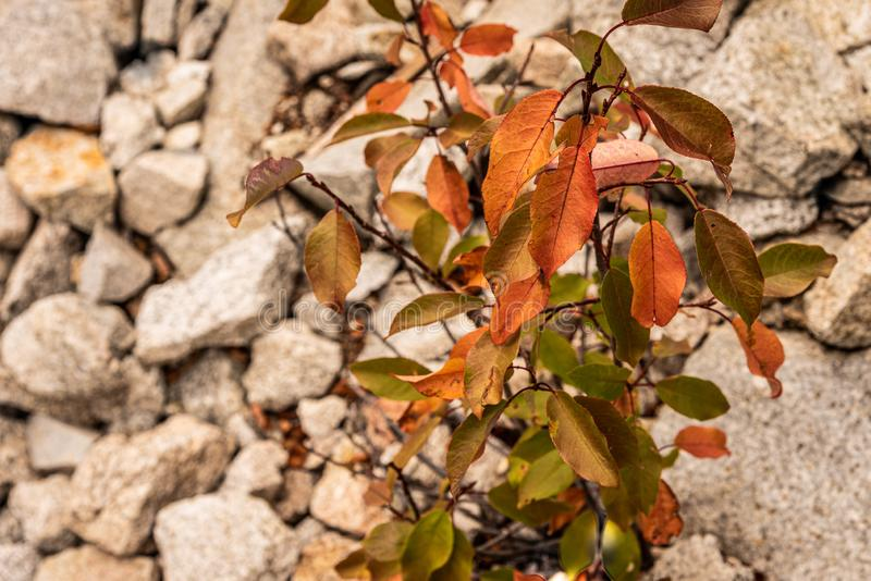 Background of textured rock formations with fall leaves in the foreground stock photography