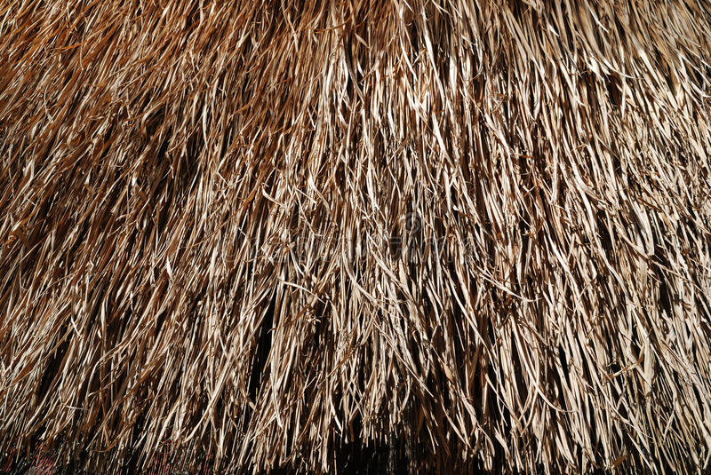 Background from thatch. The top of a hut's straw texture stock photography