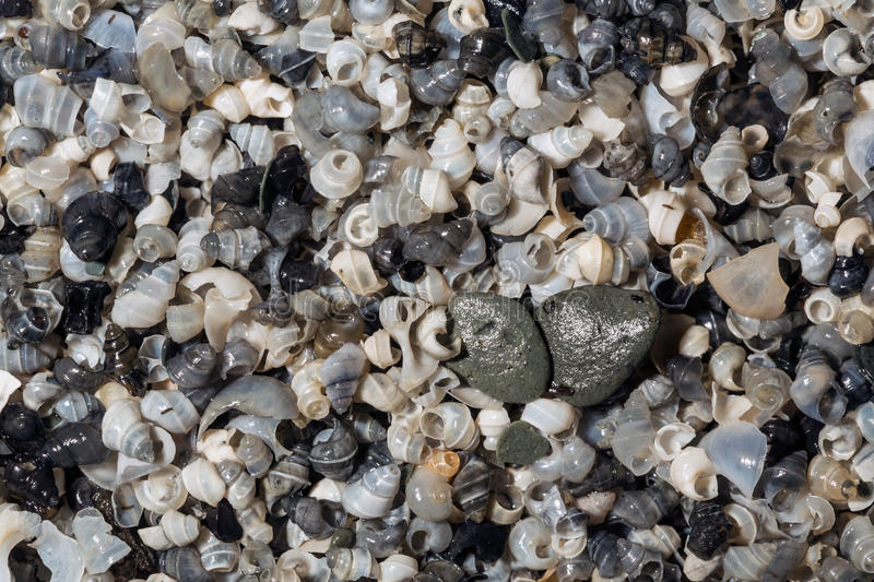 Background of tiny snail shells. In assorted colors royalty free stock image