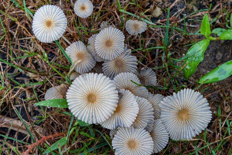 Tiny White Mushrooms Background royalty free stock photos