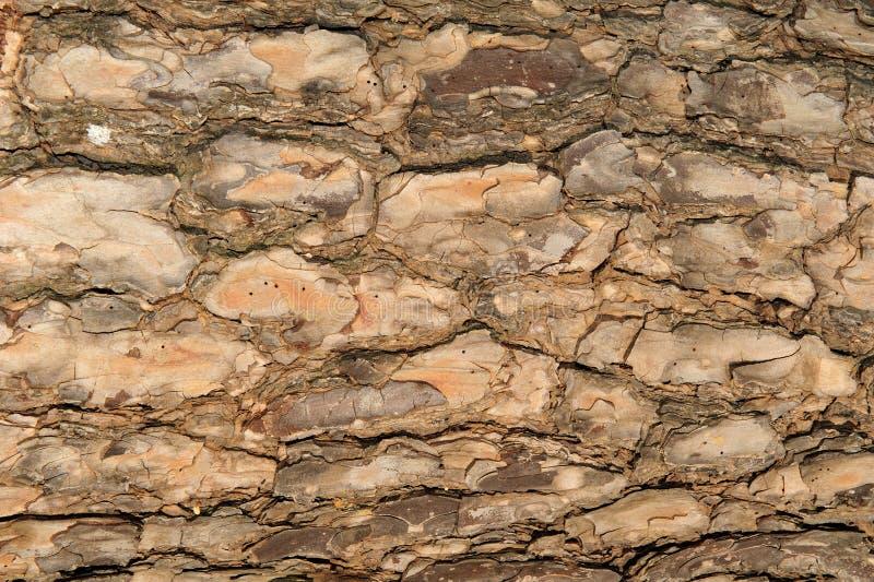 Background Of Tree Bark Stock Photos