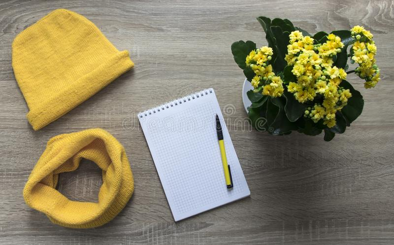 Background tree flower calandiva yellow snod scarf cap spell knitted needles facial smoothness mohair merino wool yarn notepad pen. Background tree flower stock photos