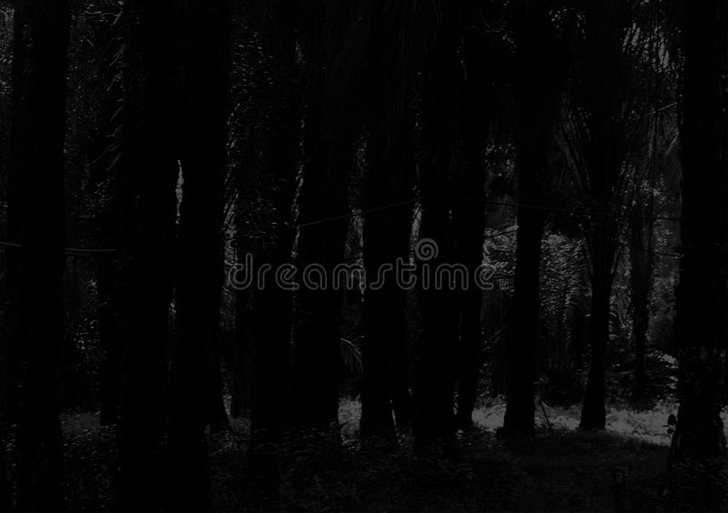 Background of trees in black and white. Trees image background for use in black and white colour stock images
