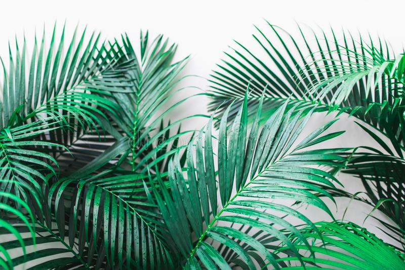 Background of tropical green palm leaves isolated on white. Background with tropical green palm leaves isolated on white. Empty place for sign, logo, design stock images