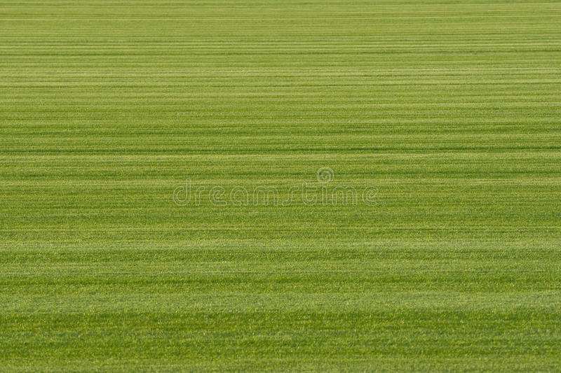 Download Background Turf Green Grass Stock Photo - Image: 16321566