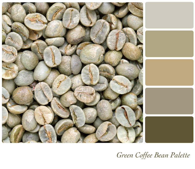 Green Coffee bean palette. A background of unroasted coffee beans in a colour palette with complimentary colour swatches stock photos