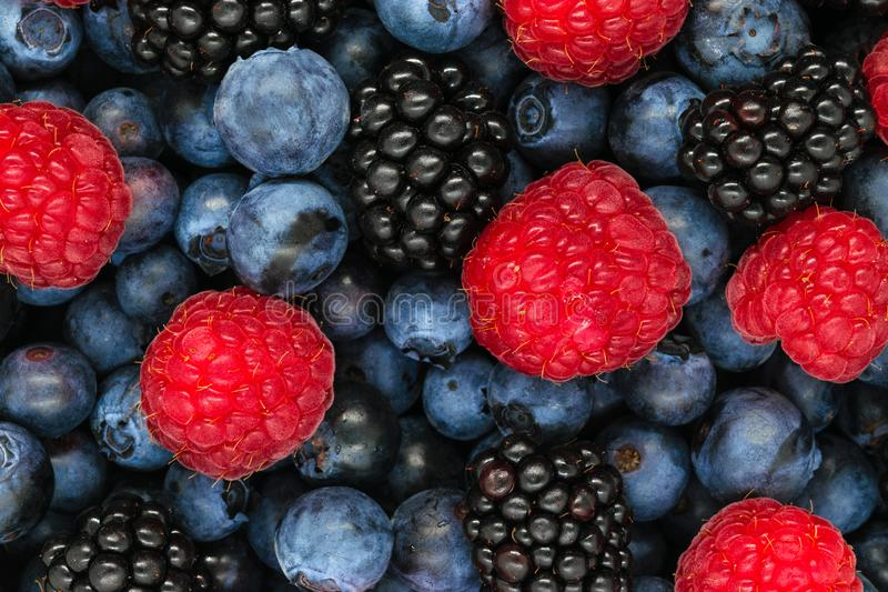 Background of various berries royalty free stock photography