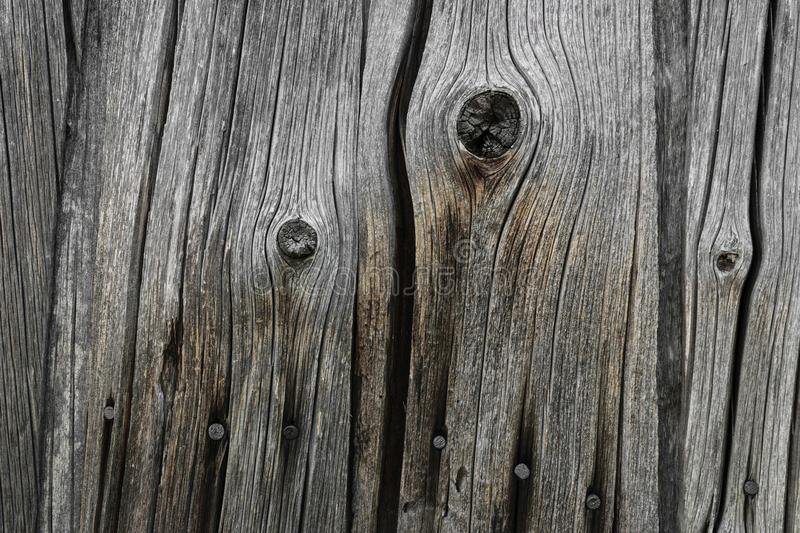 Background of Very Old Wood Board Wall with Rusty Nails stock image