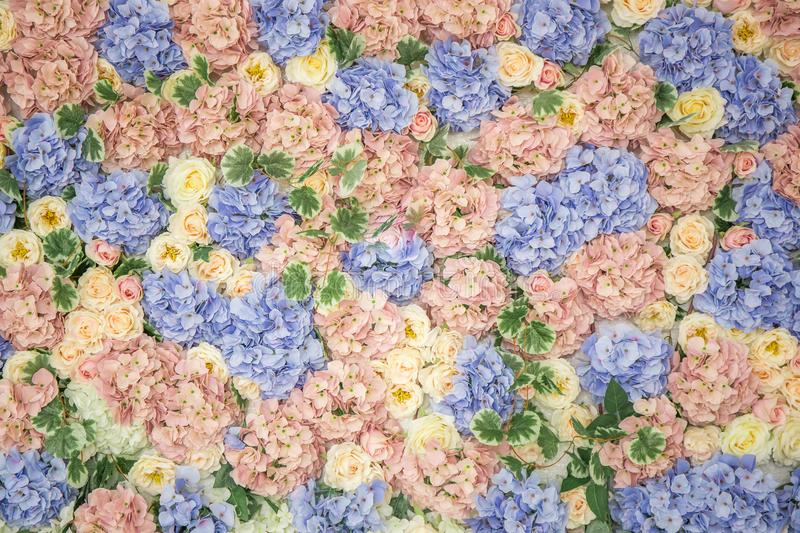 Background, wall of flowers stock photography
