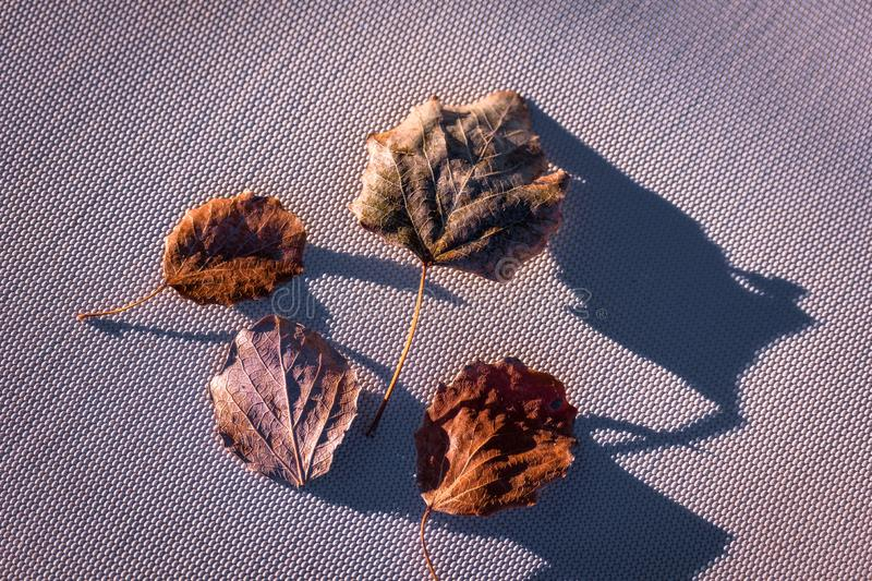 Background wallpaper with fallen leafs of autumn stock photography