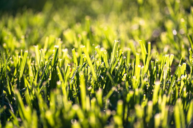 Background wallpaper texture of grass royalty free stock photography