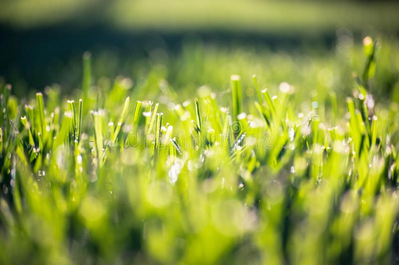 Background wallpaper texture of grass stock image