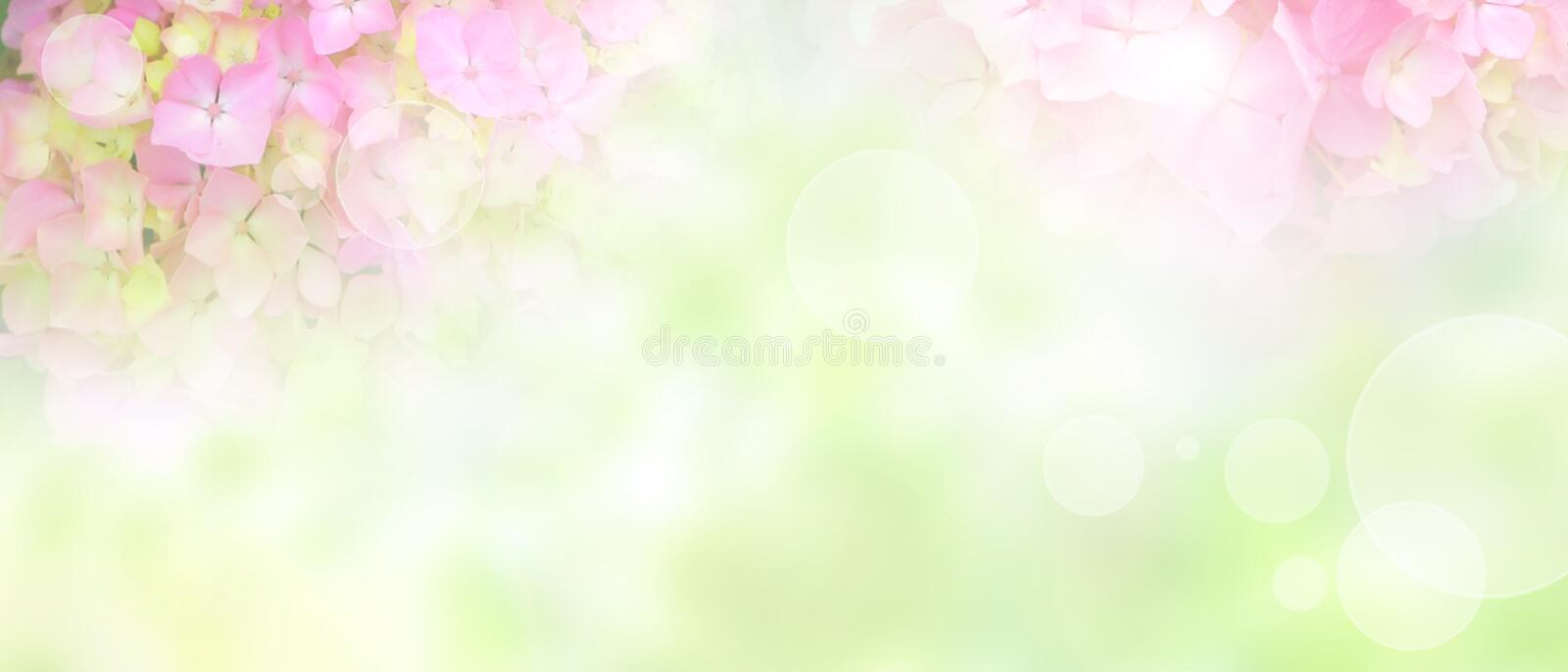 Background for a wedding. Background with tender pink hydrangeas for a wedding decoration and short depth of field stock photos