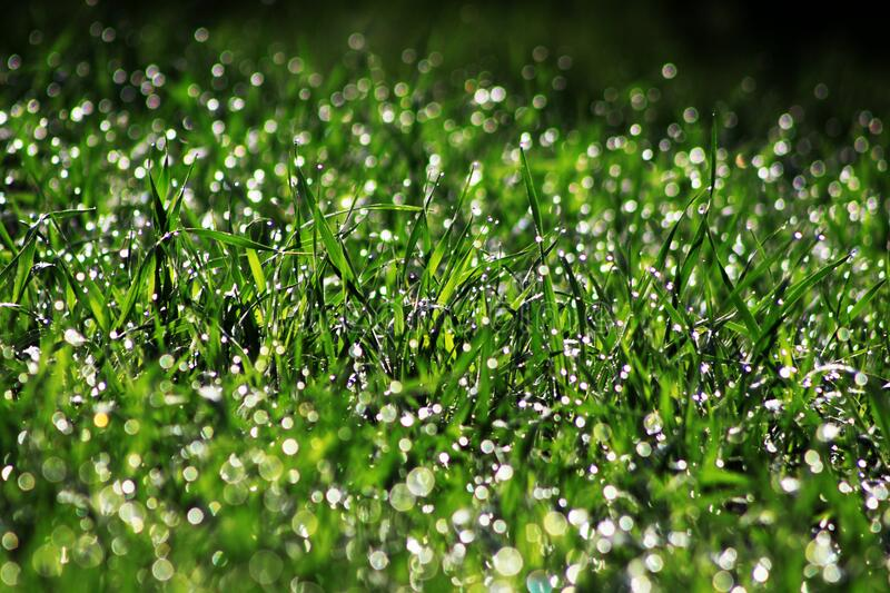 Background of wet grass stock photos