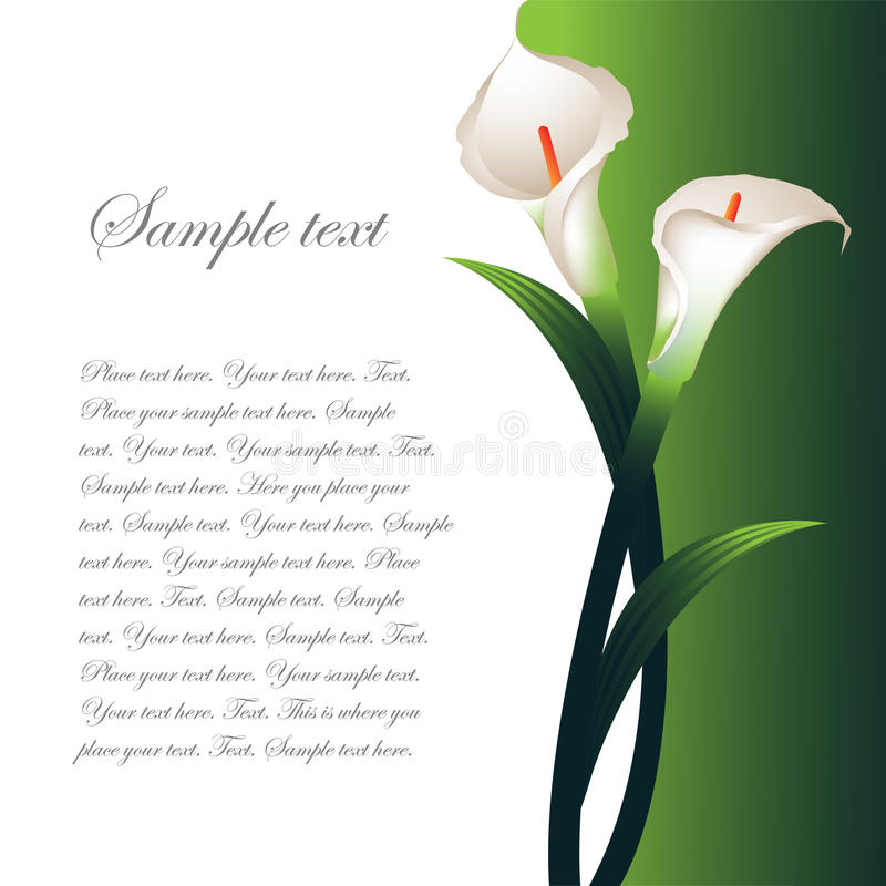 Background with white callas stock illustration