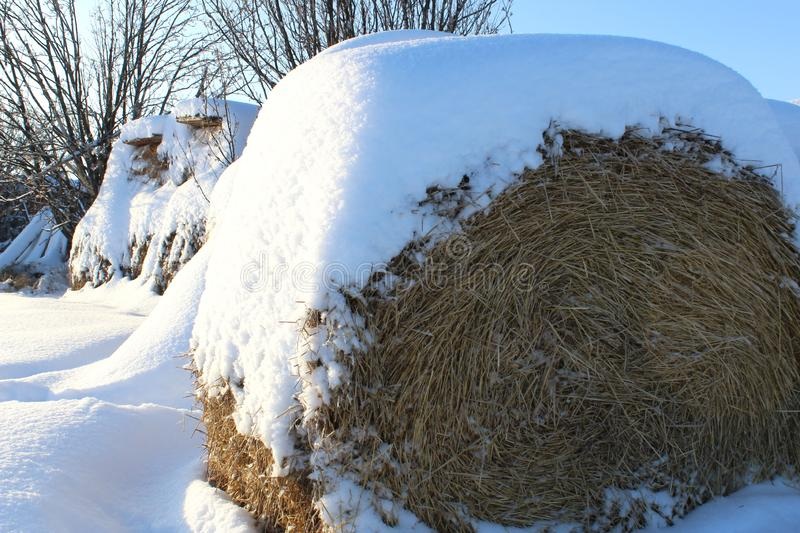 One roll of hay stands in white snow royalty free stock photos