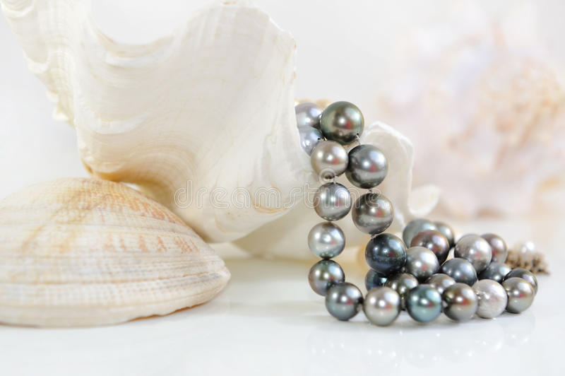 Background of the white sea shells and black pearls. stock images