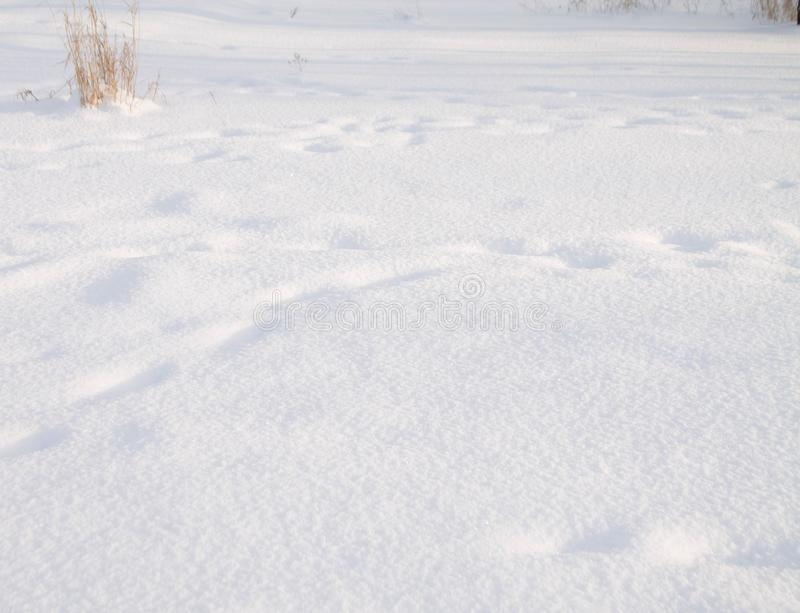 Background white texture snow close up, winter royalty free stock photo