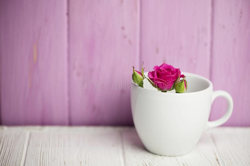 Background of wild pink rose in a white cup stock images