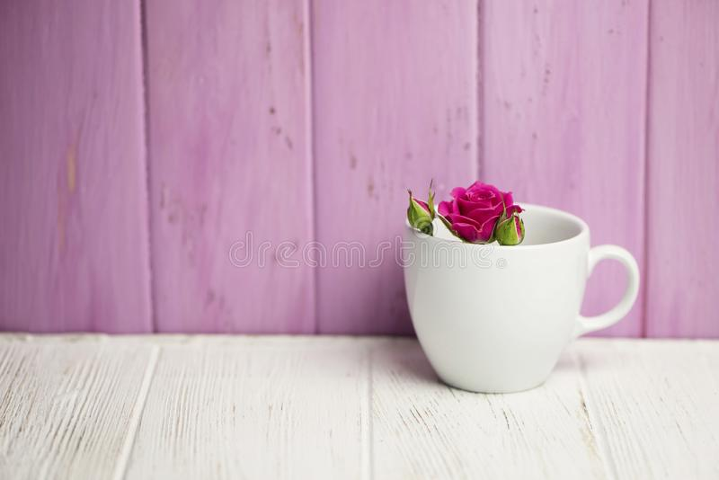 Background of wild pink rose in a white cup stock photos