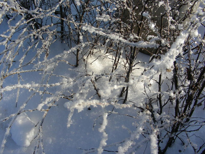 Background winter vegetation. bushes and trees covered with hoarfrost and ice royalty free stock image